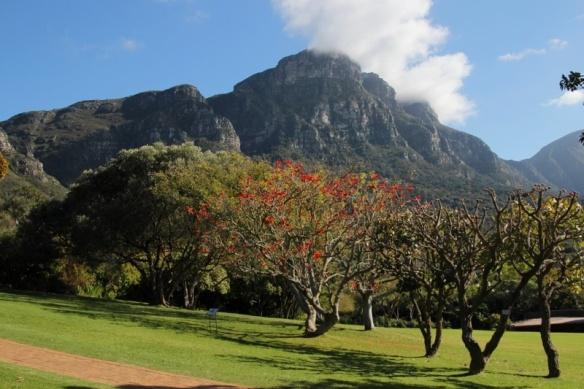 Kirstenbosch Botanical Garden, Cape Town SouthAfrica