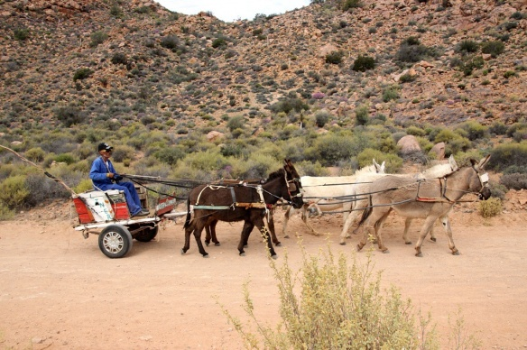 Mule-drawn cart in copper mining region near Springbok, South Africa