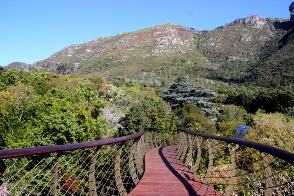 canopy walk at Kirstenbosch Garden, Cape Town