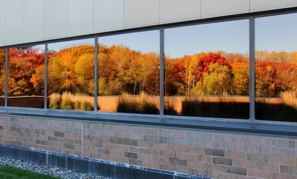 fall color in an office building