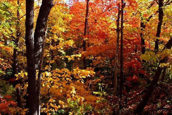 fall color-Minnesota woods