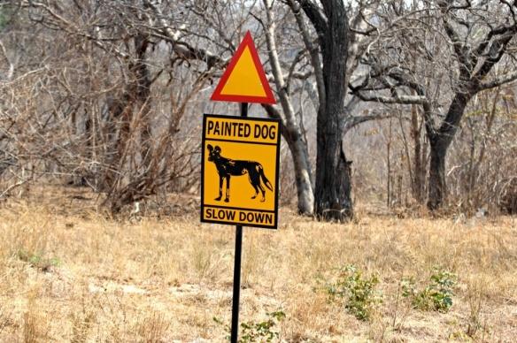 Painted dog conservation project, Hwange park, Zimbabwe