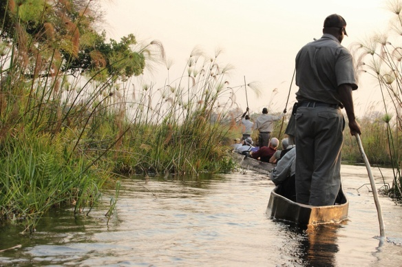 Exploring the Okavango delta by macoro dugout canoe