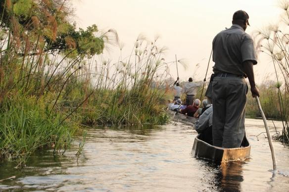 Exploring the Okavango delta by macoro dugout canoe