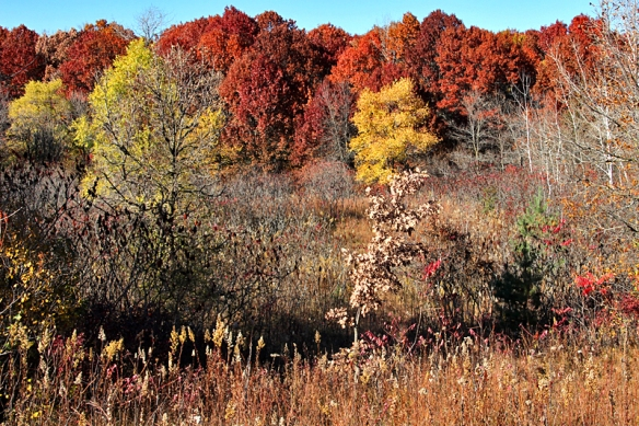 red oak forest