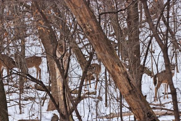 deer-in-the-woods-winter