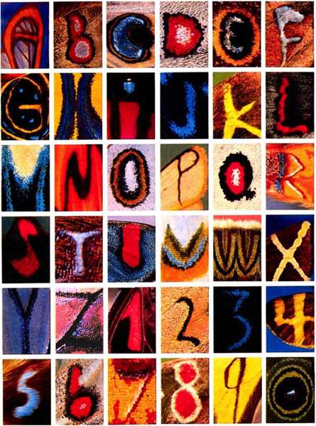 Kjell Sandved butterfly alphabet