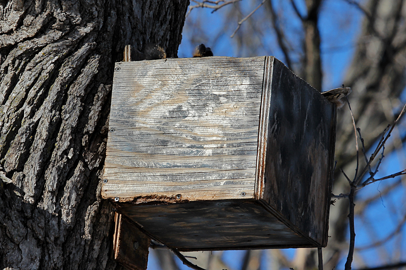 Great Horned Owl Nest Box Plans House Design And