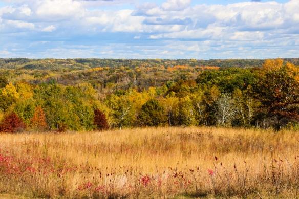 prairie forest edge