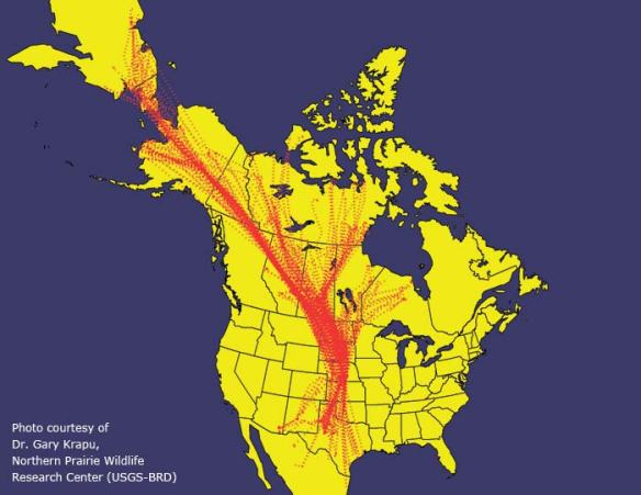 Central Flyway_Map