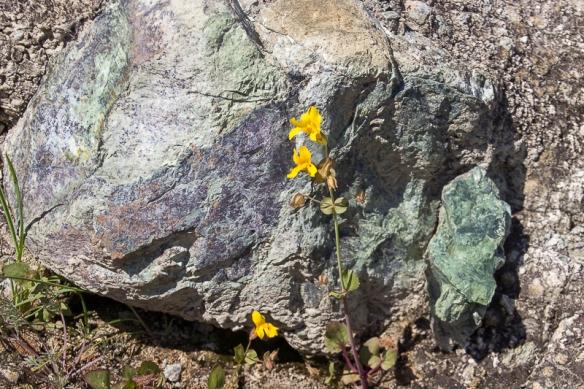 serpentine rock-