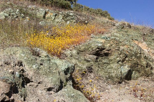 serpentine rock and flowers-