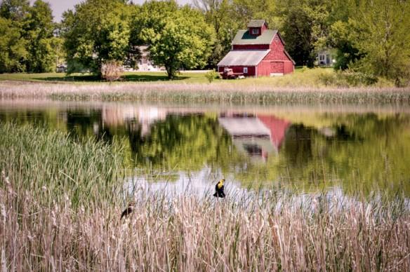 barn reflection-in a pothole lake