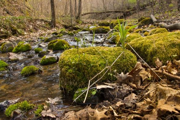 falls creek SNA, MN