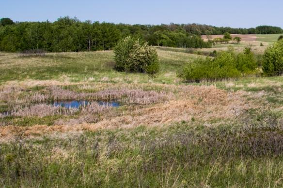 prairie pothole pond on Ordway prairie, near Sundberg, MN