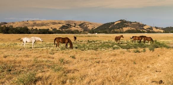 pasture land near Calero Park