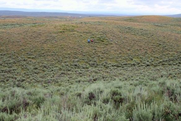 Sagebrush in Wyoming
