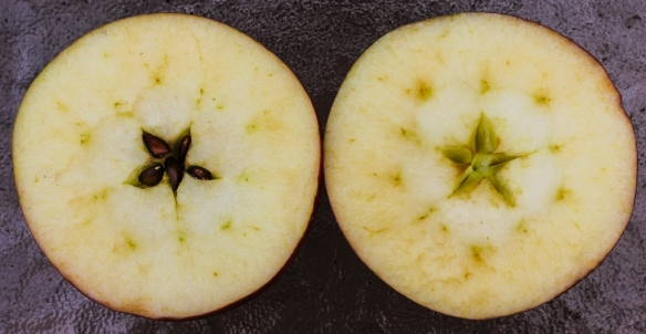 cross section of apple-