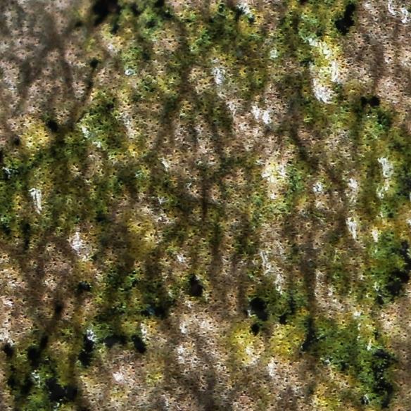 gray treefrog color-closeup