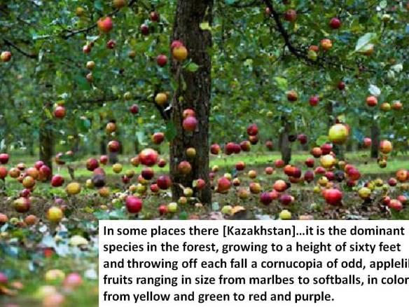 Michael Pollan - apple origin