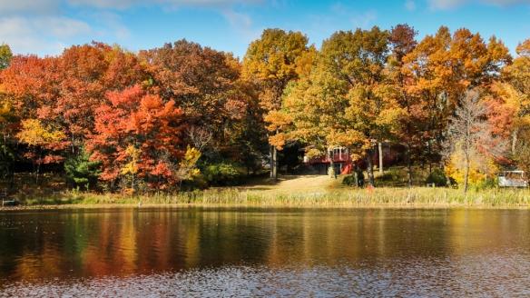 fall color in oaks