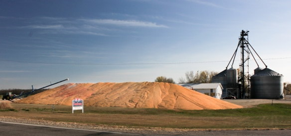 Mountain of corn at Sunburg, MN during fall harvest