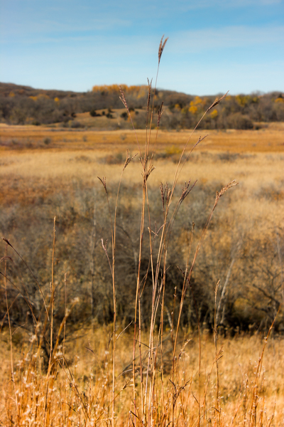 sheepberry fen-big bluestem