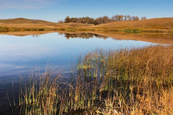 sheepberry fen-prairie pothole lake-