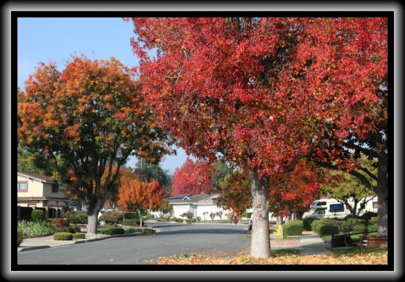 Fall color, San Jose CA