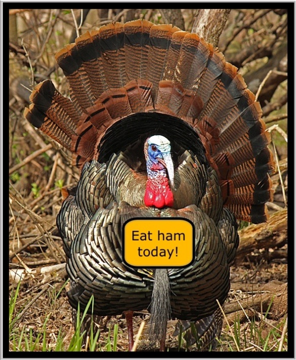 Tom Turkey Thanksgiving wish