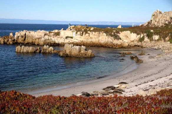 Harbor Seals restin o the beach at Monterey Bay