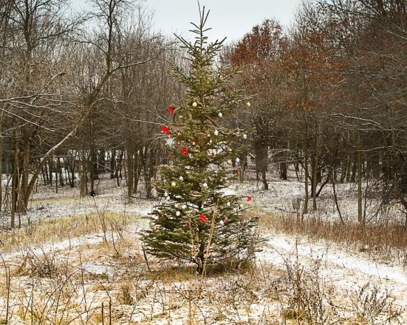 christmas tree-