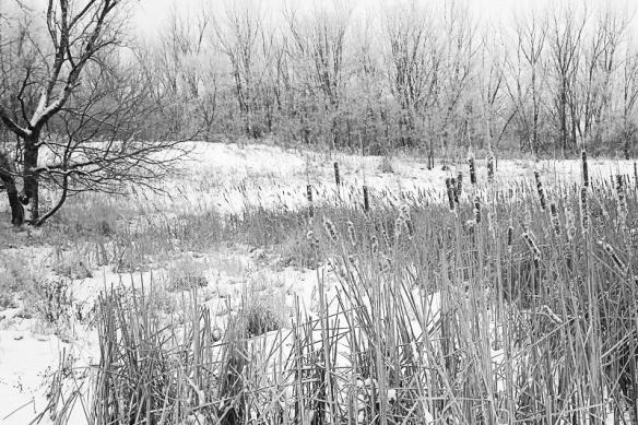 snail lake marsh-