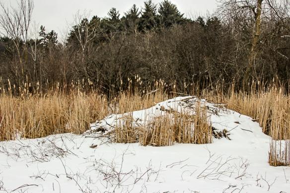 beaver lodge-