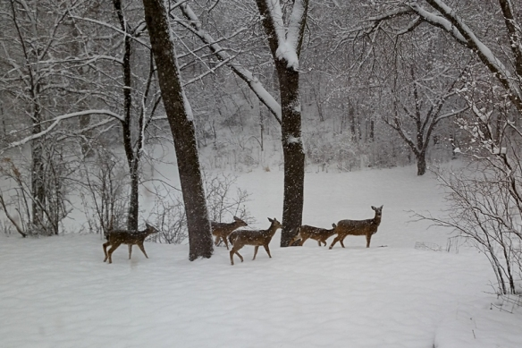 deer herd in the snow-