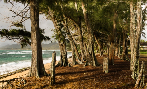 kauai beach forest-