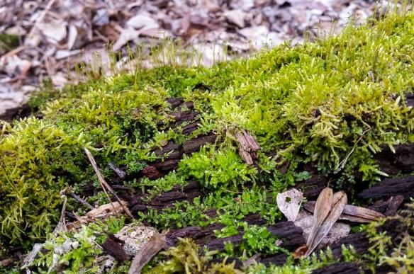 moss on a rotten log
