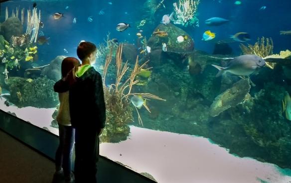 aquarium-MN zoo-
