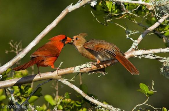 cardinals-Rudiger-Merz
