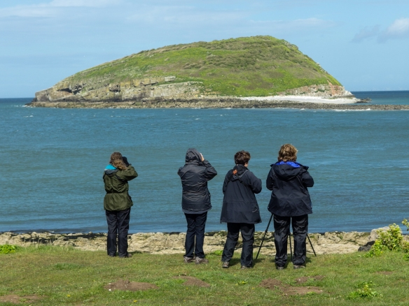 anglesey-puffin island