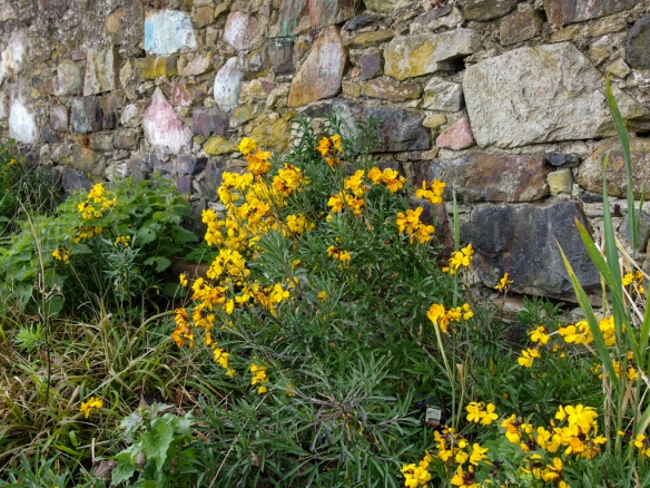 spring flowers against the castle wall