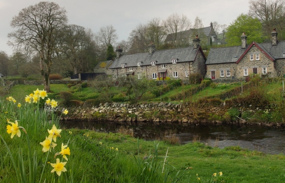 daffodils and stone walls