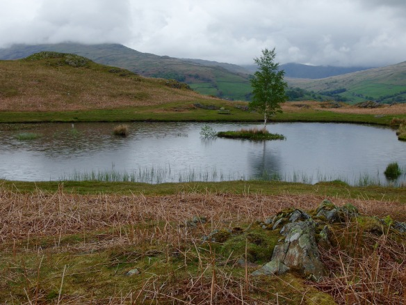 Lily Tarn on Loughrigg fell, above Ambleside