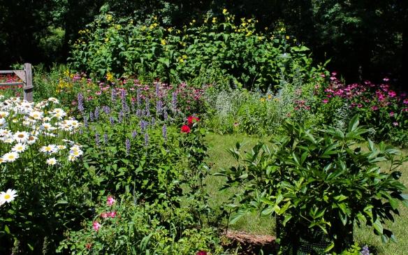 backyard garden-