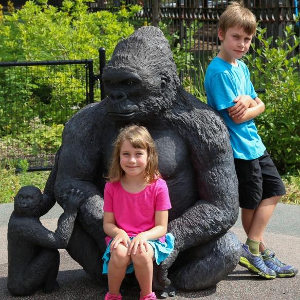 orangutan at como zoo