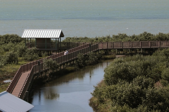 South Padre Island birding and nature center boardwalk