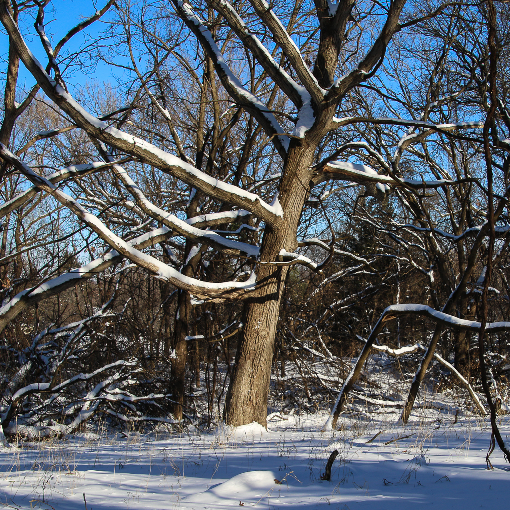 Why Don't Trees Freeze Solid In The Winter?