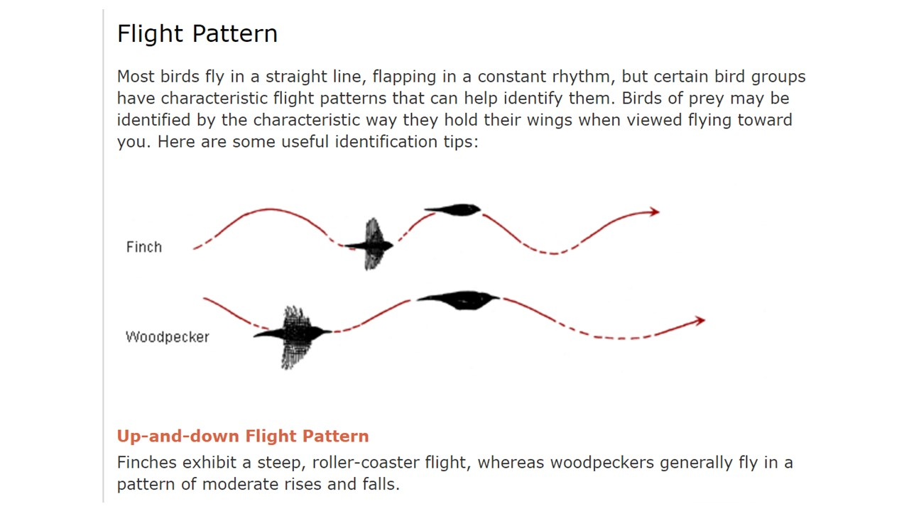 Bird Flight Patterns Amazing Inspiration Design