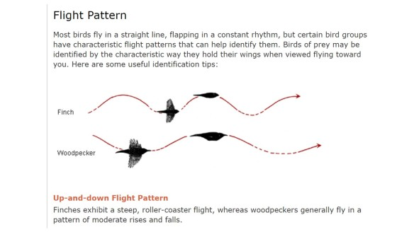 Flap-glide pattern of bounding flight in small birds