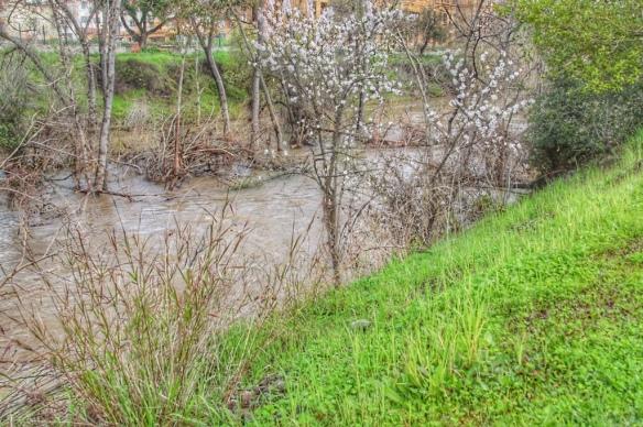 Los Gatos Creek flood
